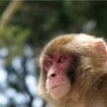 長唄「外記猿(げきざる)」歌詞と解説