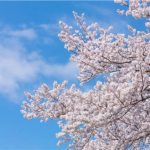 日本舞踊を知る・深める!おすすめ記事ランキング【これからの人も、より詳しく知りたい方も】