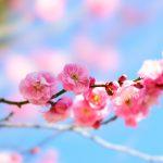 端唄「梅にも春」歌詞と解説