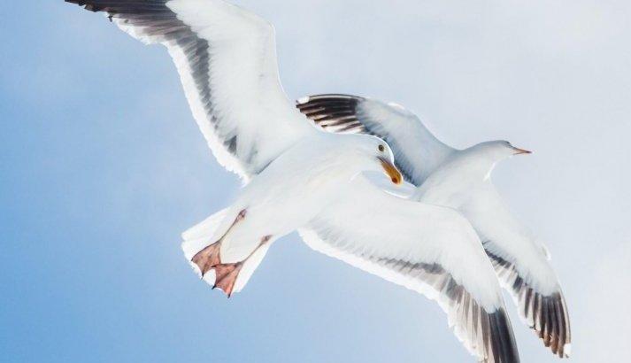 長唄「都鳥(みやこどり)」歌詞と解説