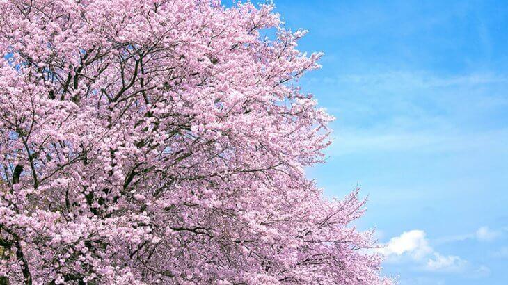 舞踊小曲「花くらべ」歌詞と解説